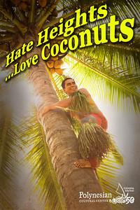 Samoan coconut tree climber